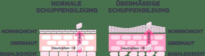 RZ_Mavena_Grafik_Schuppenbildung_RGB