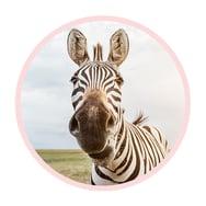 Mavena_Zebra